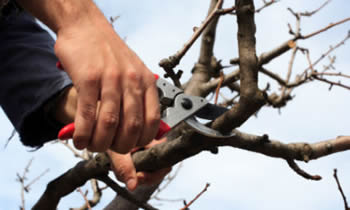 Tree Pruning in Cherry Hill NJ Tree Pruning Services in Cherry Hill NJ Quality Tree Pruning in Cherry Hill NJ