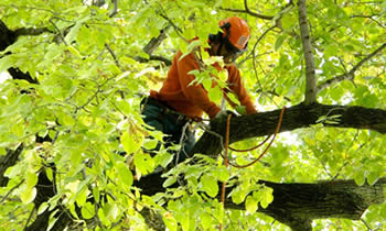 Tree Trimming in Cherry Hill NJ Tree Trimming Services in Cherry Hill NJ Tree Trimming Professionals in Cherry Hill NJ Tree Services in Cherry Hill NJ Tree Trimming Estimates in Cherry Hill NJ Tree Trimming Quotes in Cherry Hill NJ