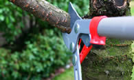 Tree Pruning Services in Cherry Hill NJ