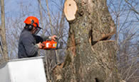 Tree Removal in Cherry Hill NJ